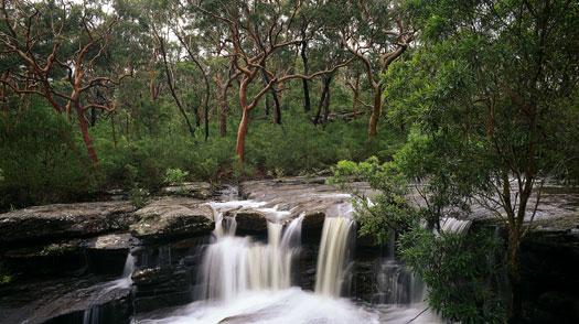 rentalcars24h blog sydney park10 #1 Sydney Sight To Admire Australian Nature!
