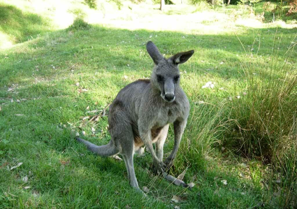 rentalcars24h blog sydney park511 #1 Sydney Sight To Admire Australian Nature!
