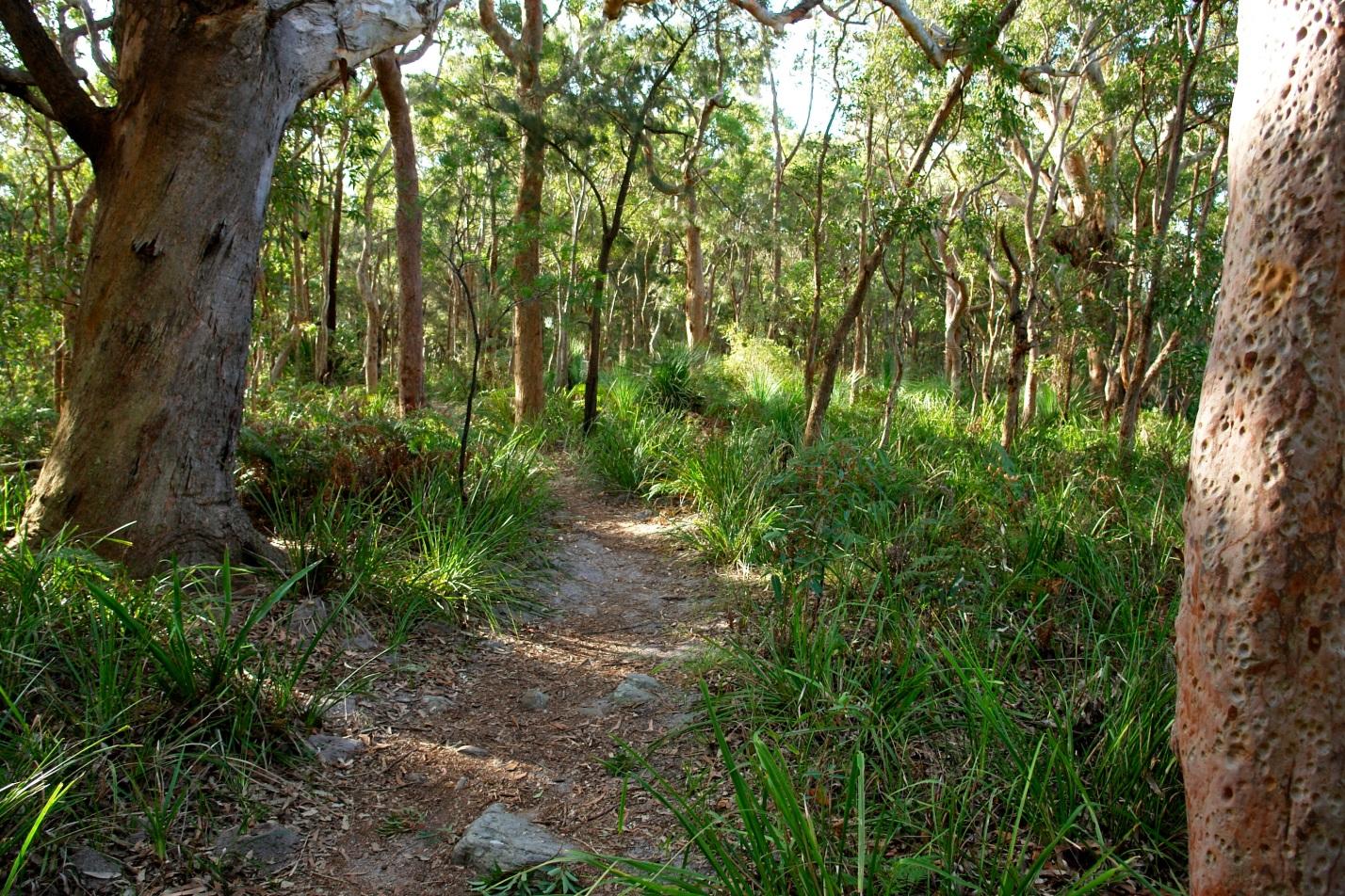 rentalcars24h blog sydney park7 #1 Sydney Sight To Admire Australian Nature!