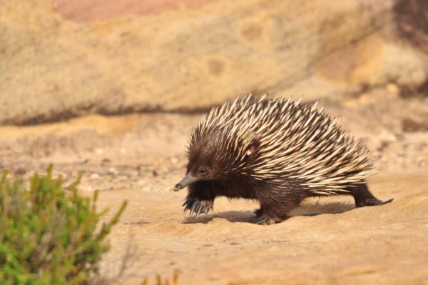 rentalcars24h blog sydney park9 #1 Sydney Sight To Admire Australian Nature!