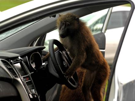 rentalcars24h bizzare driving laws11 25 Bizarre Driving Laws All Over The World