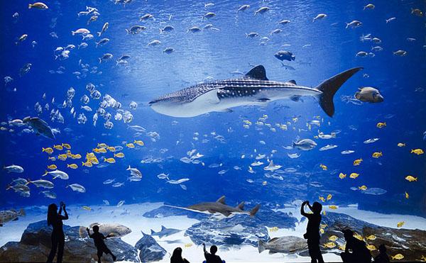 Georgia Aquarium Oceanarium