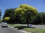 Car rental in Benoni, South Africa