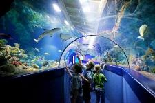 Car rental in Bristol, Aquarium, UK